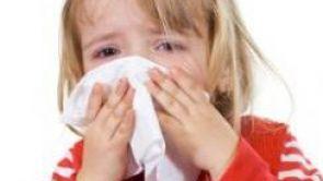 Echinacea: Minimale Wirkung bei Erkältung